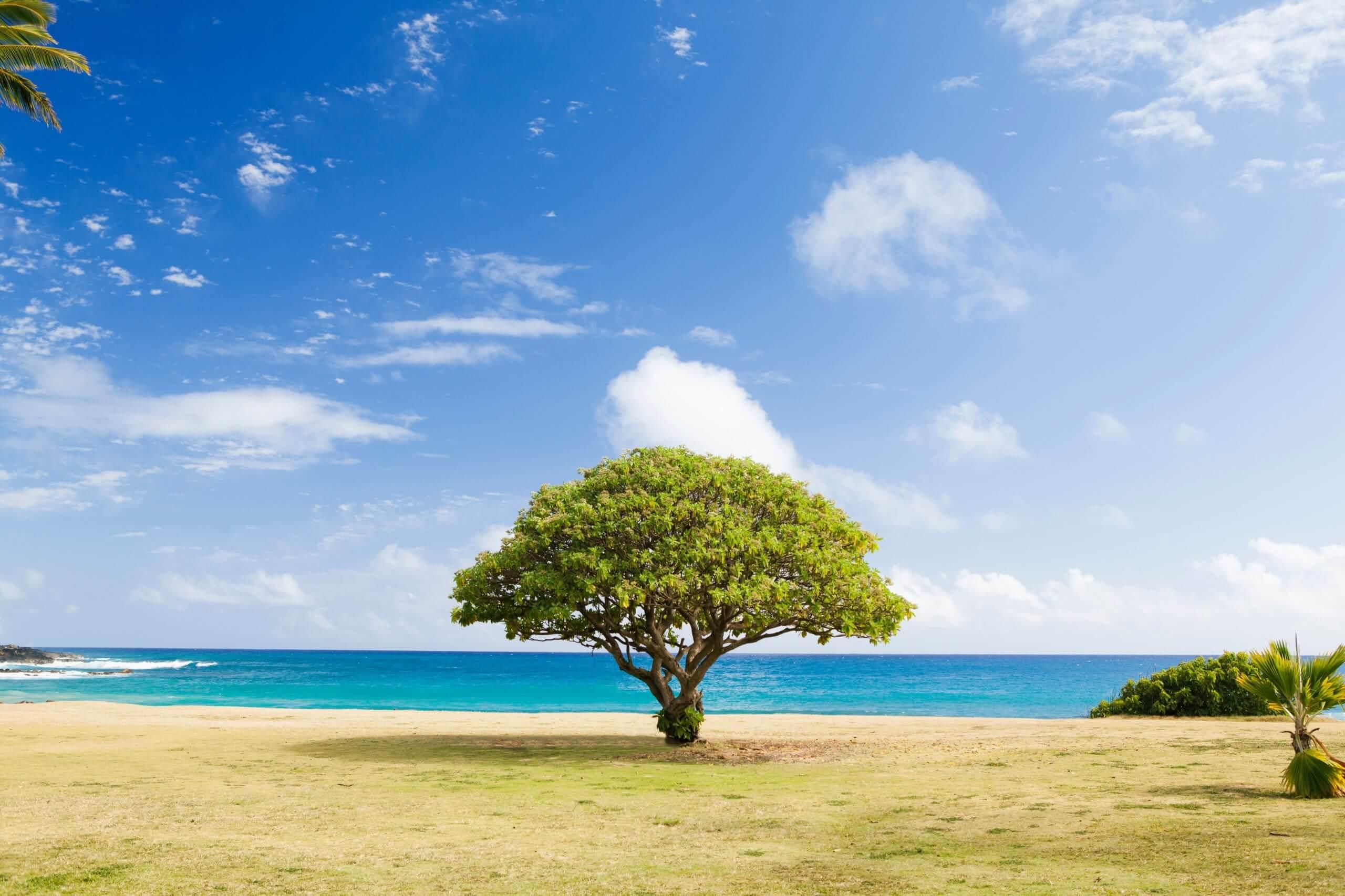 木のある風景